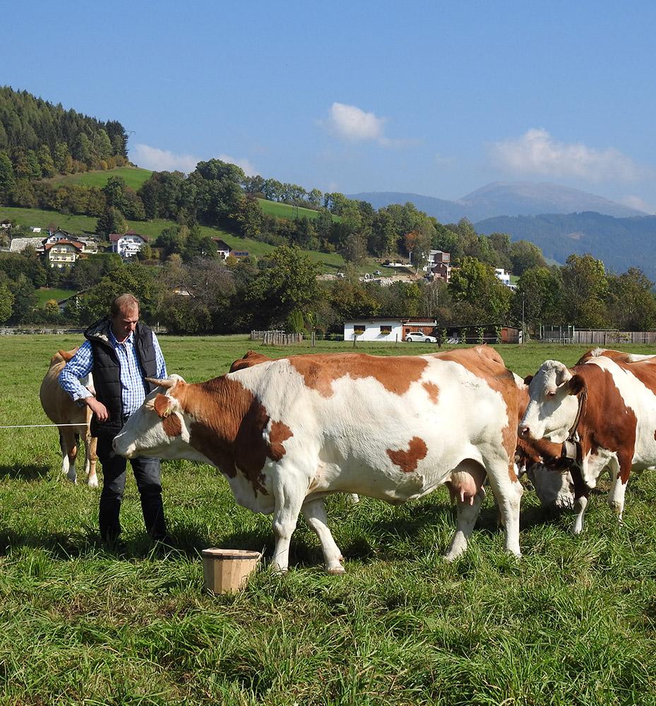 Kühe mit Emmerich Preiml auf der Weide